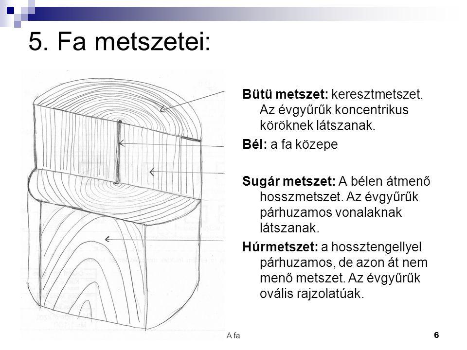 A fa 7 6.Fatest részei: Kéreg: védi a fát. Háncs: másodlagos kéreg.