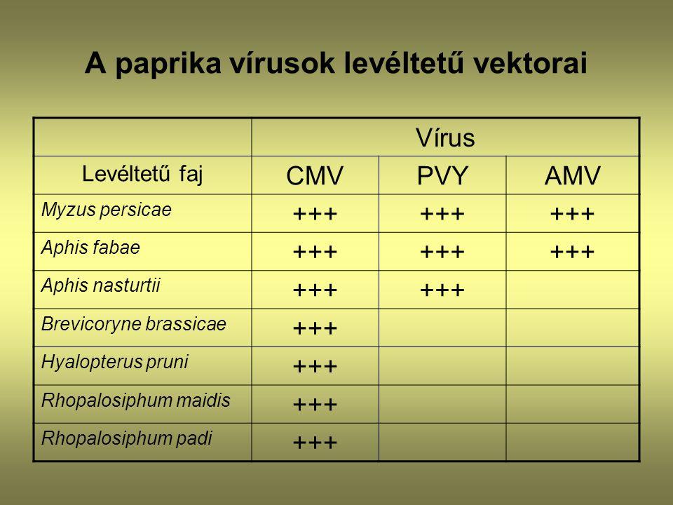 A paprika vírusok levéltetű vektorai Vírus Levéltetű faj CMVPVYAMV Myzus persicae +++ Aphis fabae +++ Aphis nasturtii +++ Brevicoryne brassicae +++ Hy
