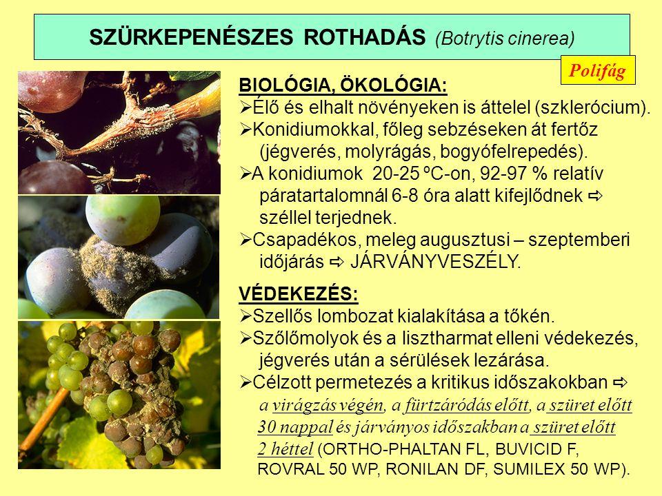 SZÜRKEPENÉSZES ROTHADÁS (Botrytis cinerea) BIOLÓGIA, ÖKOLÓGIA:  Élő és elhalt növényeken is áttelel (szklerócium).