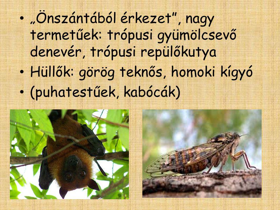 """• """"Önszántából érkezet"""", nagy termetűek: trópusi gyümölcsevő denevér, trópusi repülőkutya • Hüllők: görög teknős, homoki kígyó • (puhatestűek, kabócák"""
