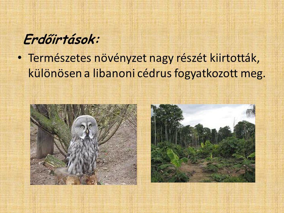 Erdőirtások: • Természetes növényzet nagy részét kiirtották, különösen a libanoni cédrus fogyatkozott meg.