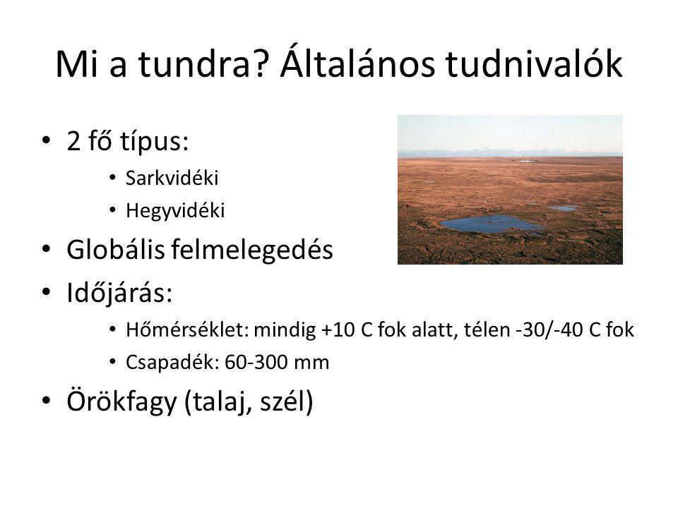 Mi a tundra? Általános tudnivalók • 2 fő típus: • Sarkvidéki • Hegyvidéki • Globális felmelegedés • Időjárás: • Hőmérséklet: mindig +10 C fok alatt, t