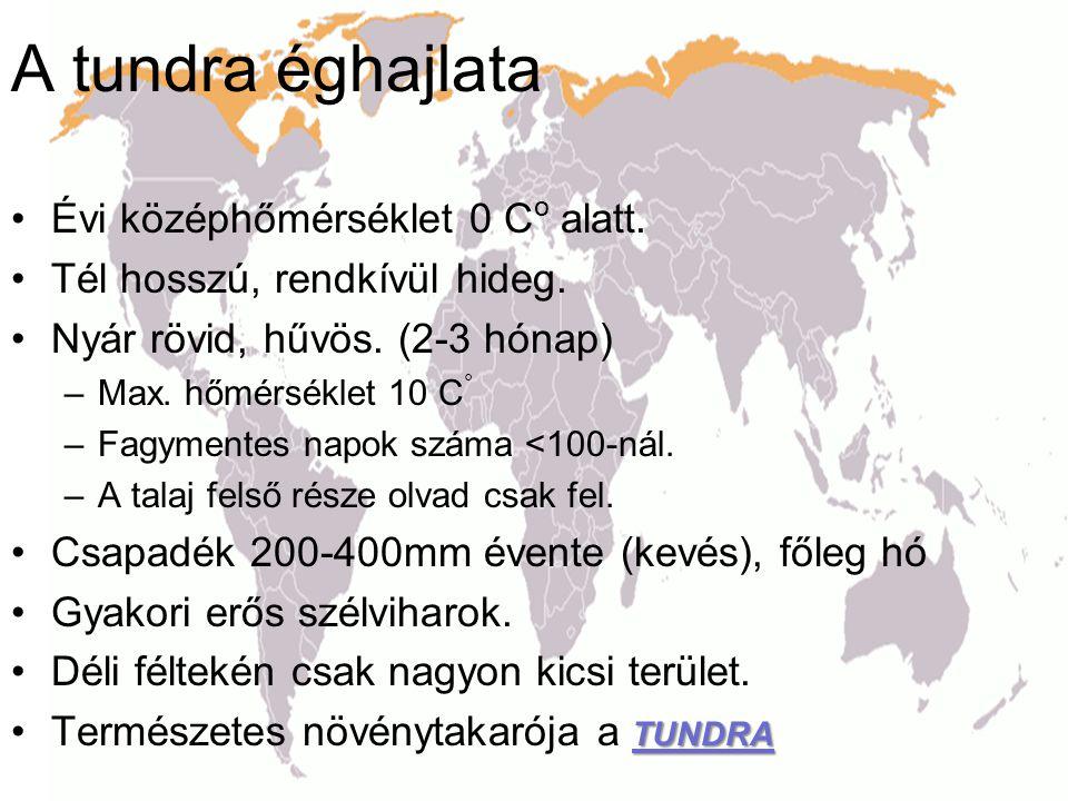 A tundra éghajlata •Évi középhőmérséklet 0 C o alatt. •Tél hosszú, rendkívül hideg. •Nyár rövid, hűvös. (2-3 hónap) –Max. hőmérséklet 10 C ° –Fagyment