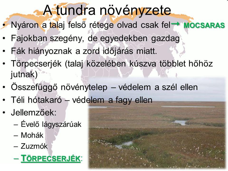 A tundra növényzete  MOCSARAS •Nyáron a talaj felső rétege olvad csak fel  MOCSARAS •Fajokban szegény, de egyedekben gazdag •Fák hiányoznak a zord i