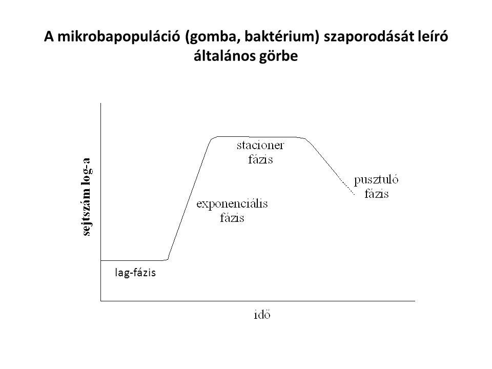 A mikrobapopuláció (gomba, baktérium) szaporodását leíró általános görbe lag-fázis