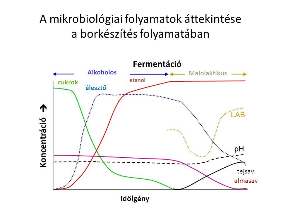 Az élesztőgombák és a tejsavbaktériumok számának alakulása a borkészítés, majd a tárolás során szüret alkoholos erjedés almasav- bontás tárolás (Idő) Mikrobák / ml Élesztőgomba
