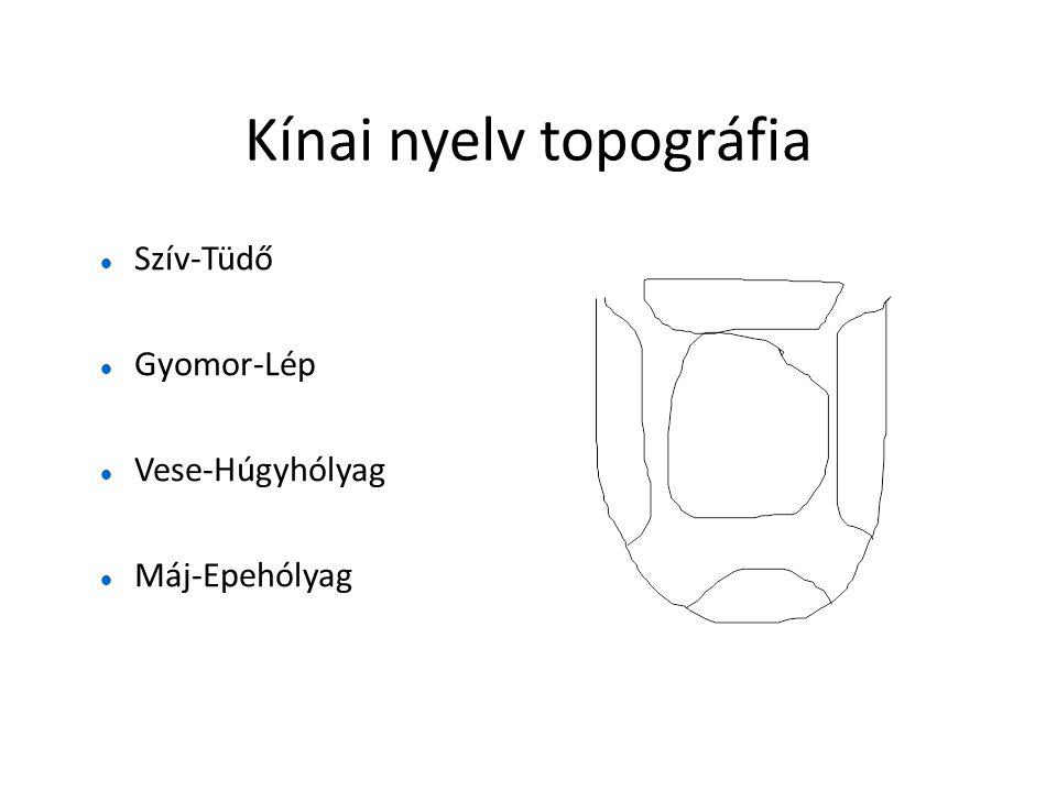 Kínai nyelv topográfia  Szív-Tüdő  Gyomor-Lép  Vese-Húgyhólyag  Máj-Epehólyag