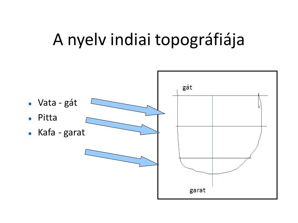 A nyelv indiai topográfiája  Vata - gát  Pitta  Kafa - garat gát garat