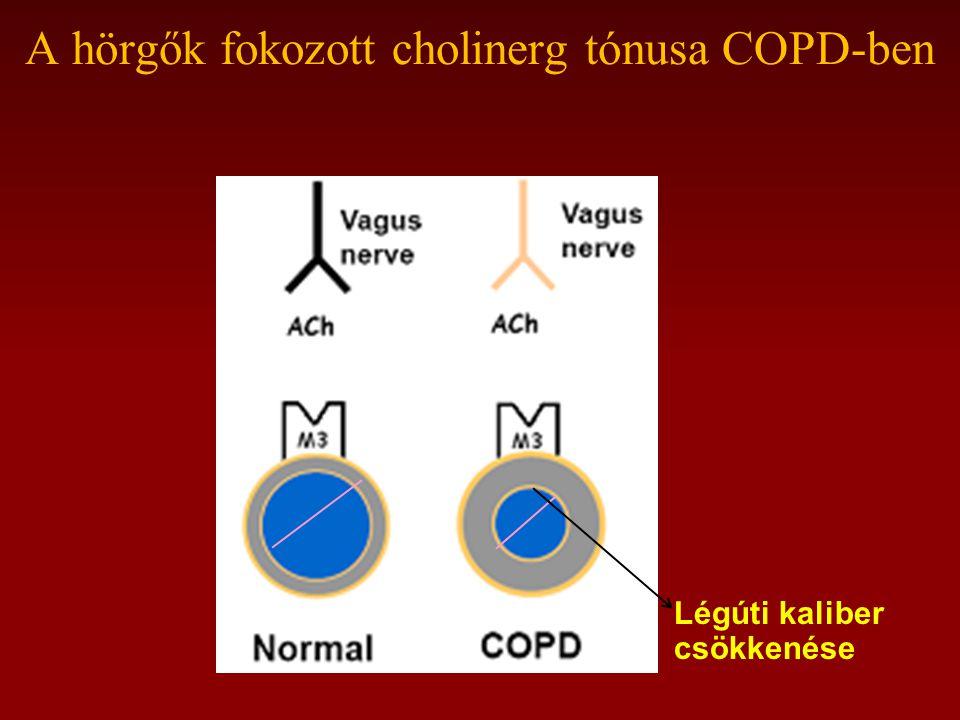 A hörgők fokozott cholinerg tónusa COPD-ben Légúti kaliber csökkenése