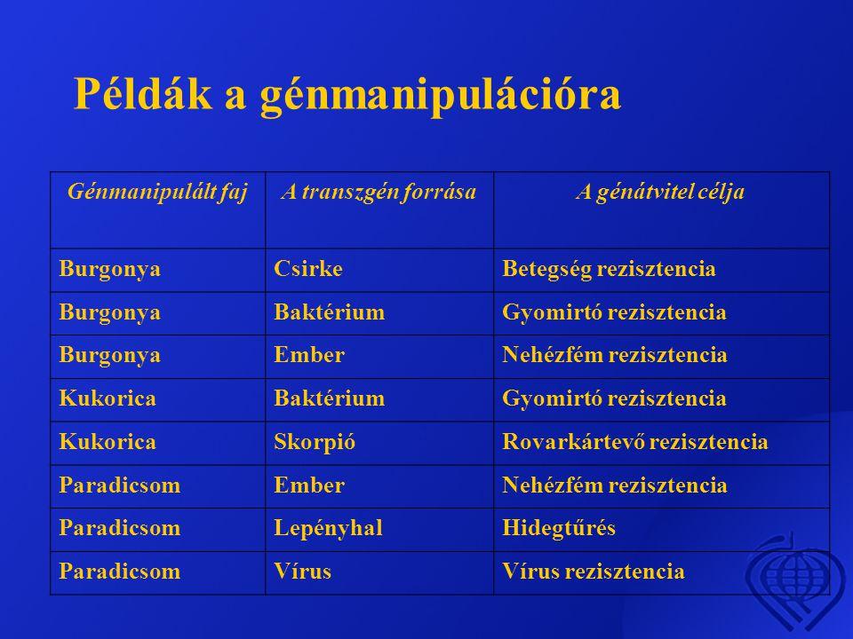 Példák a génmanipulációra Génmanipulált fajA transzgén forrásaA génátvitel célja BurgonyaCsirkeBetegség rezisztencia BurgonyaBaktériumGyomirtó rezisztencia BurgonyaEmberNehézfém rezisztencia KukoricaBaktériumGyomirtó rezisztencia KukoricaSkorpióRovarkártevő rezisztencia ParadicsomEmberNehézfém rezisztencia ParadicsomLepényhalHidegtűrés ParadicsomVírusVírus rezisztencia