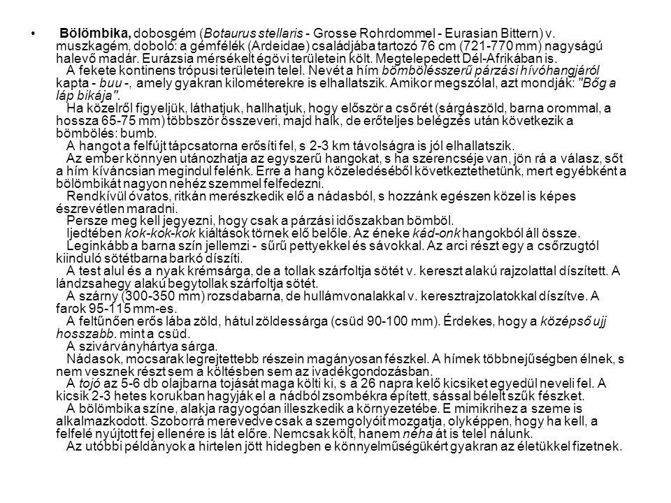 • Bölömbika, dobosgém (Botaurus stellaris - Grosse Rohrdommel - Eurasian Bittern) v. muszkagém, doboló: a gémfélék (Ardeidae) családjába tartozó 76 cm