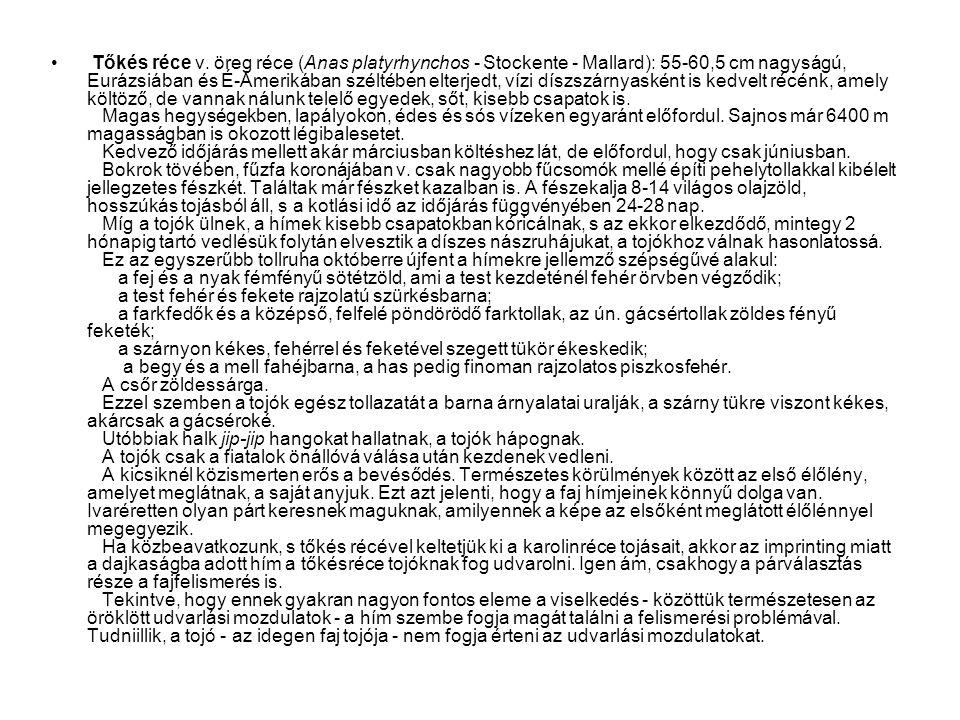 • Tőkés réce v. öreg réce (Anas platyrhynchos - Stockente - Mallard): 55-60,5 cm nagyságú, Eurázsiában és É-Amerikában széltében elterjedt, vízi díszs