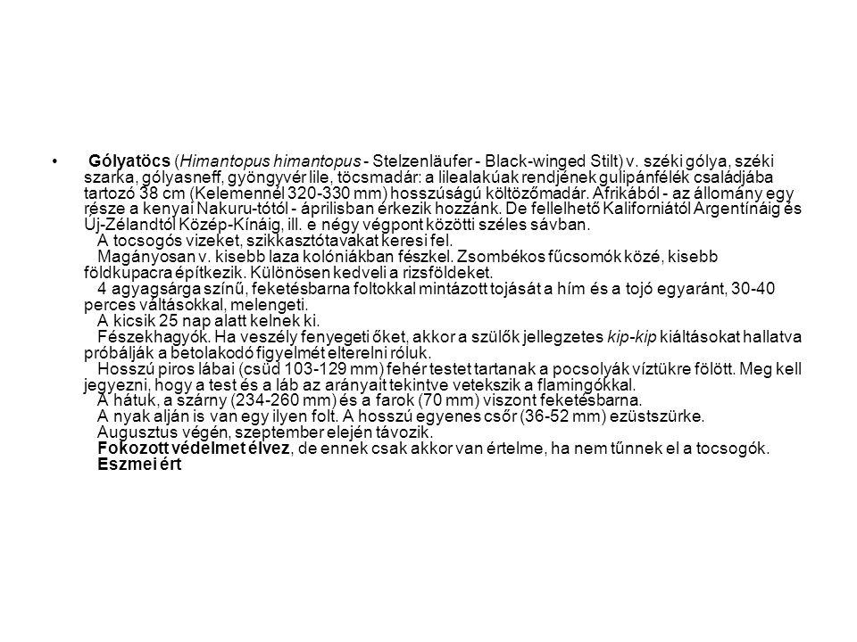 • Gólyatöcs (Himantopus himantopus - Stelzenläufer - Black-winged Stilt) v. széki gólya, széki szarka, gólyasneff, gyöngyvér lile, töcsmadár: a lileal