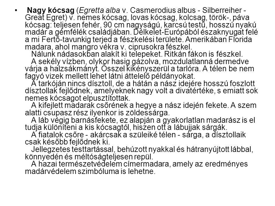 • Nagy kócsag (Egretta alba v. Casmerodius albus - Silberreiher - Great Egret) v. nemes kócsag, lovas kócsag, kolcsag, török-, páva kócsag: teljesen f