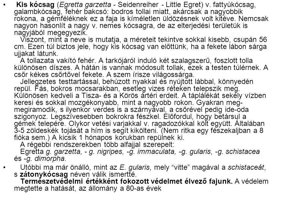 • Kis kócsag (Egretta garzetta - Seidenreiher - Little Egret) v. fattyúkócsag, galambkócsag, fehér bakcsó: bodros tollai miatt, akárcsak a nagyobbik r