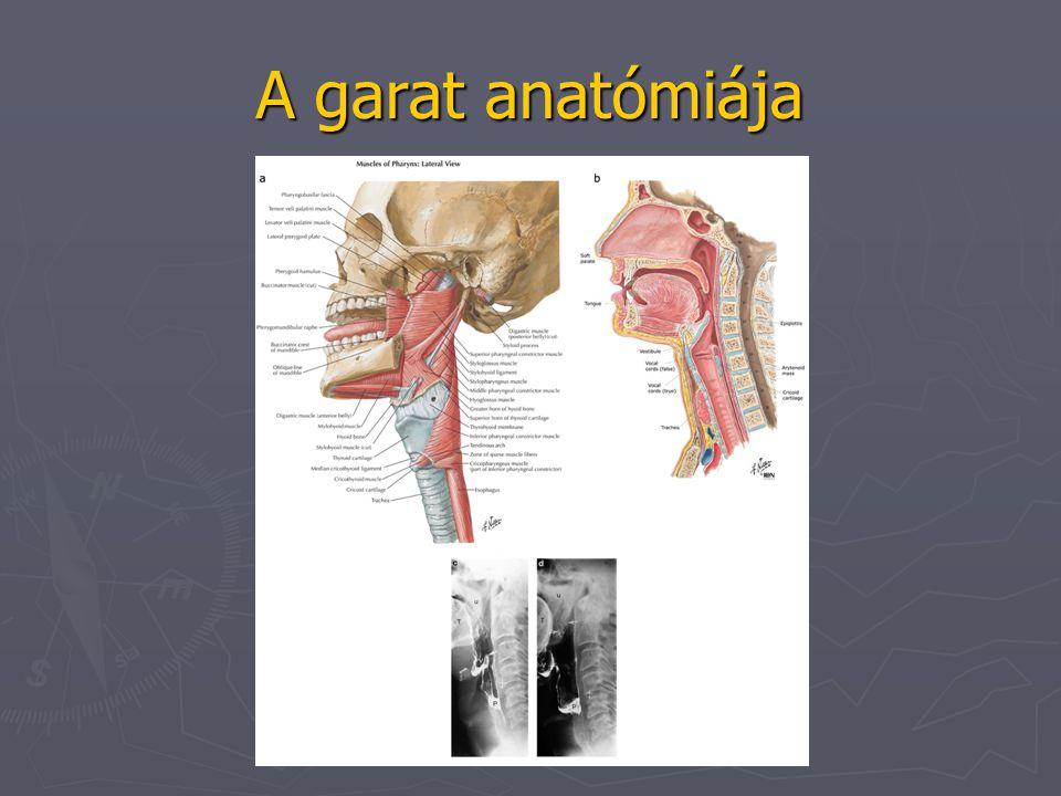 A garat funkcionális anatómiája falat lágyszájpad nyelv perisztaltikus hullám gégefő zárva Trachea légoszlop perisztaltikus hullám