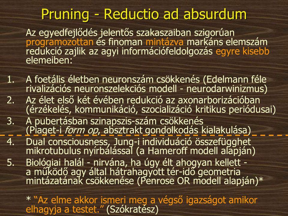 Pruning - Reductio ad absurdum Az egyedfejlődés jelentős szakaszaiban szigorúan programozottan és finoman mintázva markáns elemszám redukció zajlik az