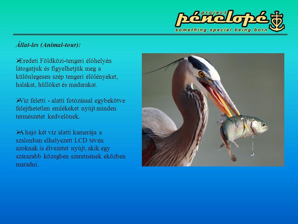 Állat-les (Animal-tour):  Eredeti Földközi-tengeri élőhelyén látogatjuk és figyelhetjük meg a különlegesen szép tengeri élőlényeket, halakat, hüllőke