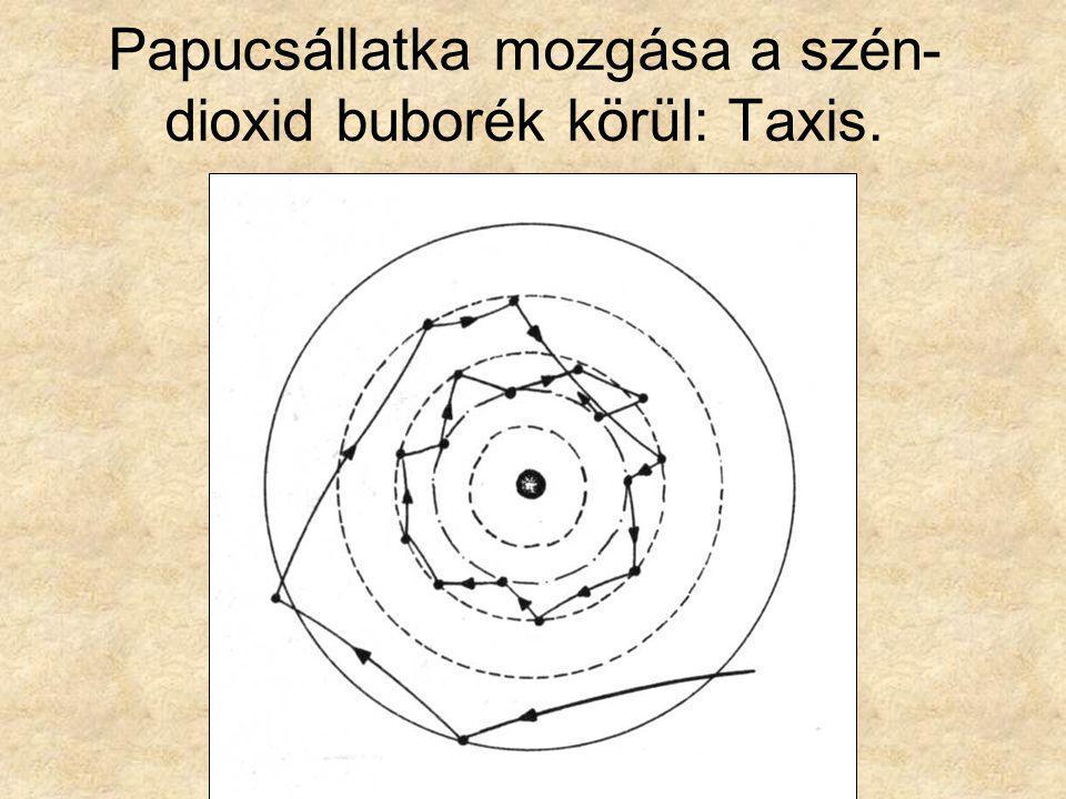 Papucsállatka mozgása a szén- dioxid buborék körül: Taxis.