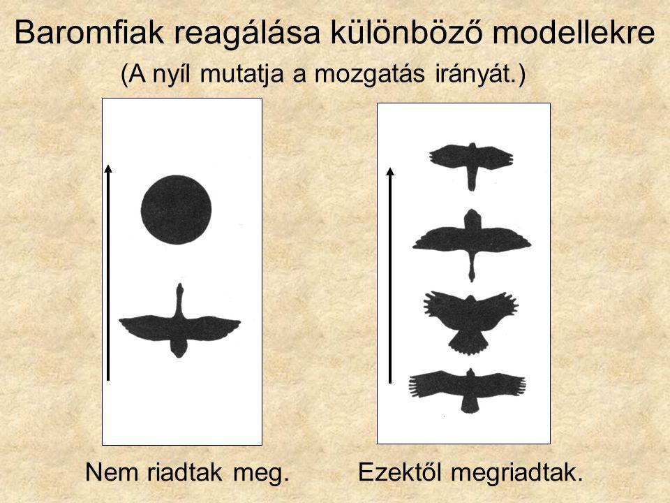 Baromfiak reagálása különböző modellekre (A nyíl mutatja a mozgatás irányát.) Nem riadtak meg.Ezektől megriadtak.