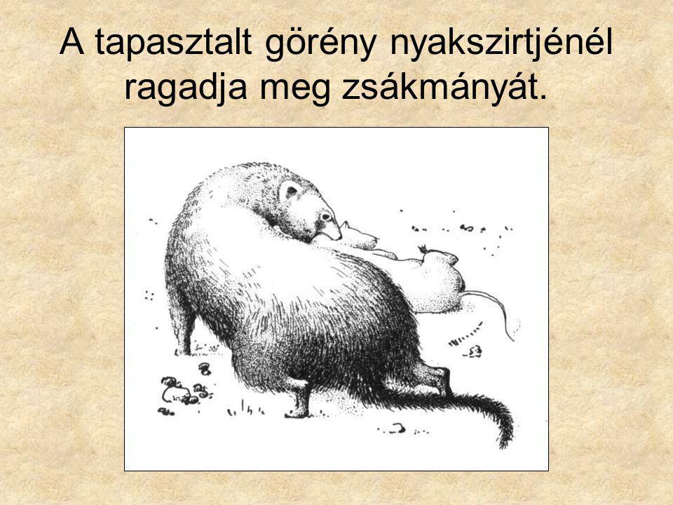 Összeállította: Gergely Tibor, a nyíregyházi Krúdy Gyula Gimnázium tanára.