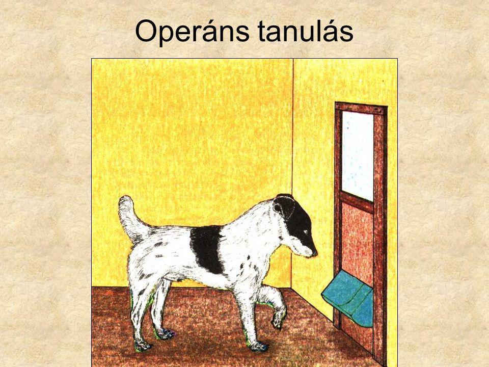 Operáns tanulás