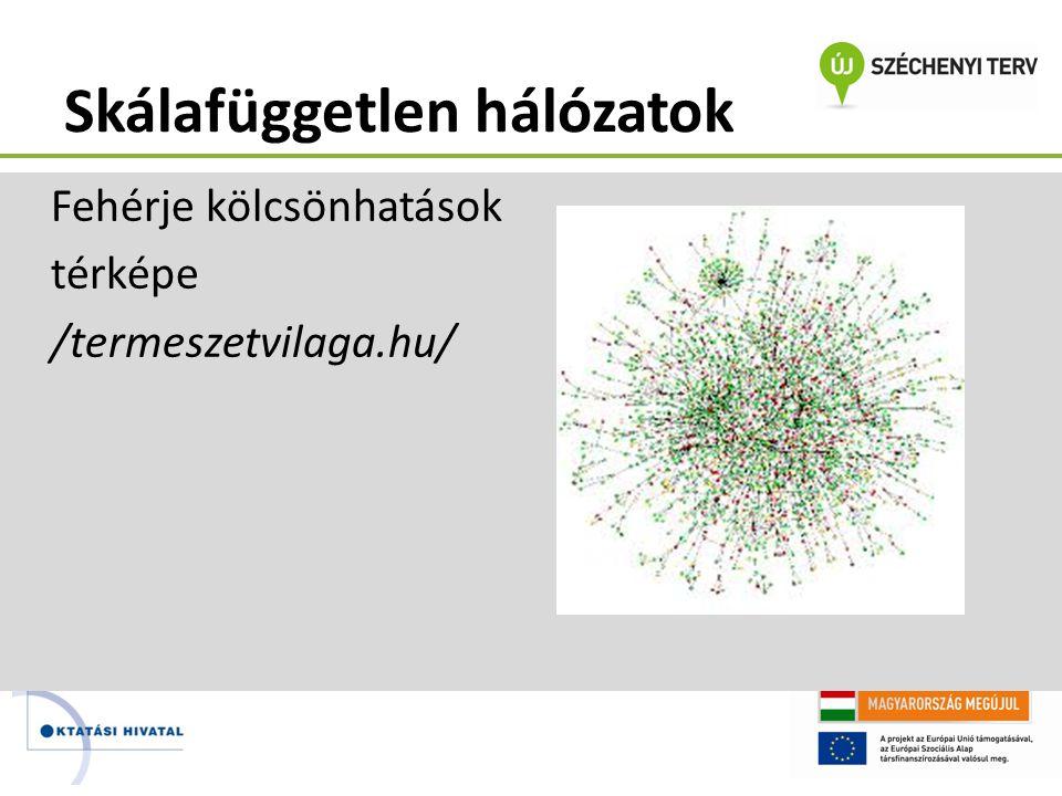 Skálafüggetlen hálózatok Fehérje kölcsönhatások térképe /termeszetvilaga.hu/