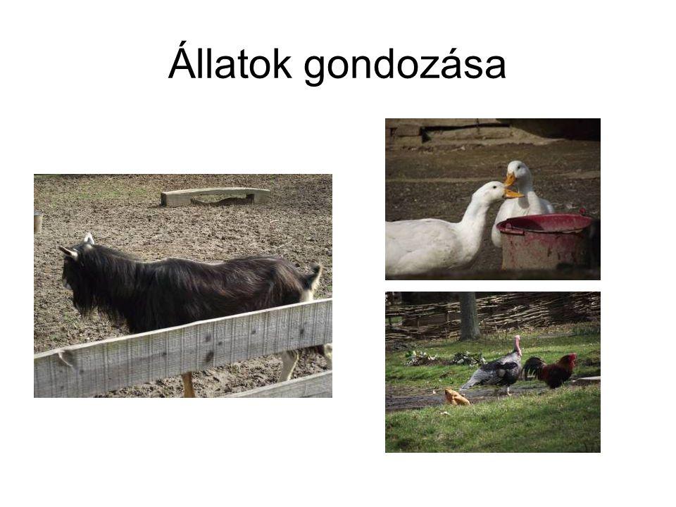 Állatok gondozása