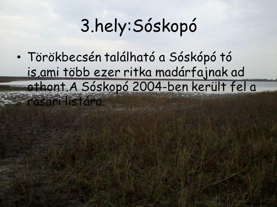 3.hely:Sóskopó • Törökbecsén található a Sóskópó tó is,ami több ezer ritka madárfajnak ad othont.A Sóskopó 2004-ben került fel a rasari listára.
