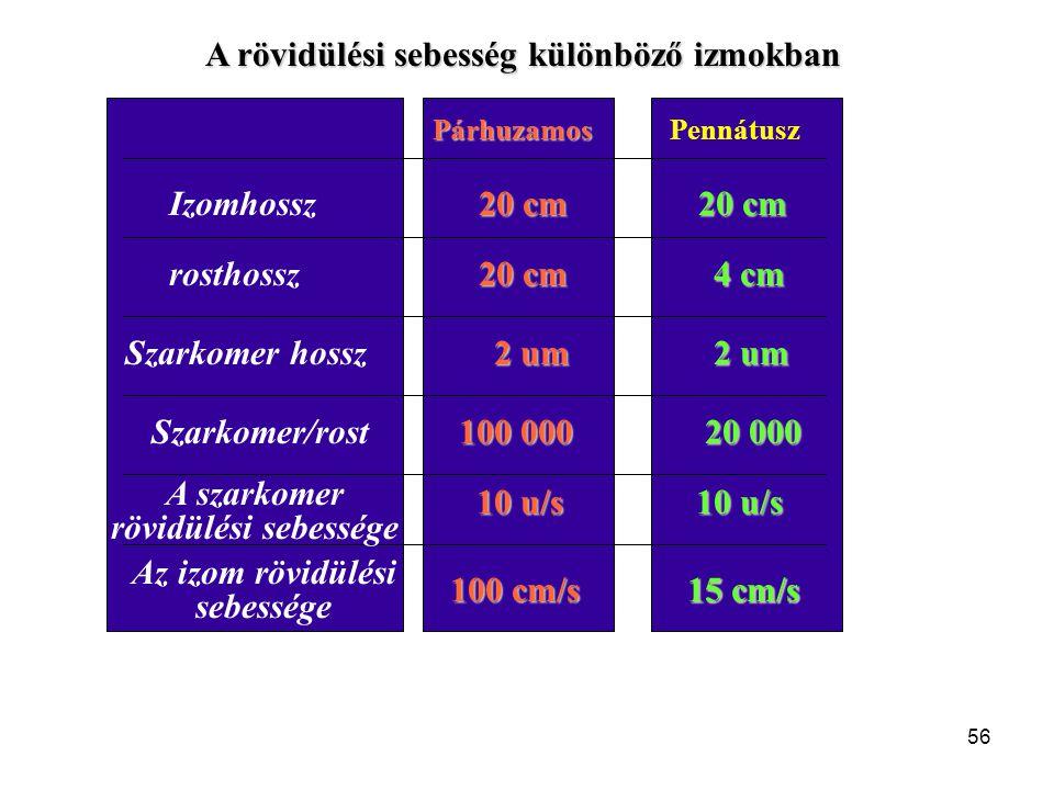 """Az """"a"""" és """"b"""" konstansok meghatározása 0 600 1200 1800 2100 300 1500 900 Fo - F/ V Súlyerő (N) Fo = 4000 N F V Fo-F/V 1 2 3 4 5 6 200 5.5 690 400 5.0"""