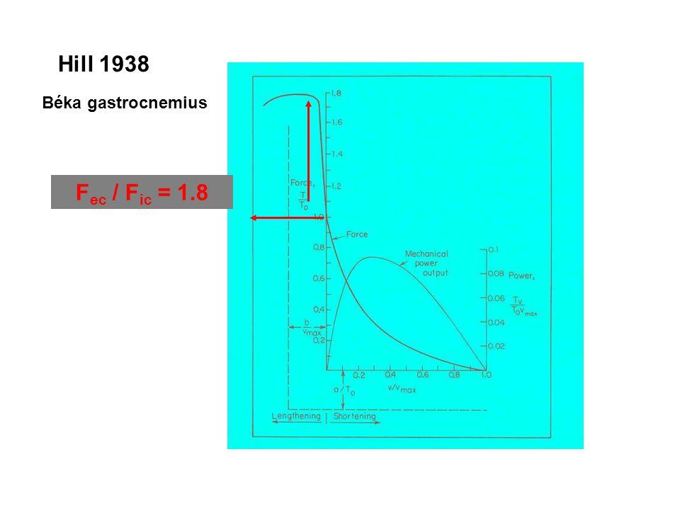 Nyomaték Szög EMG (VL) EMG (BF) Akaratlagos izomkontrakció