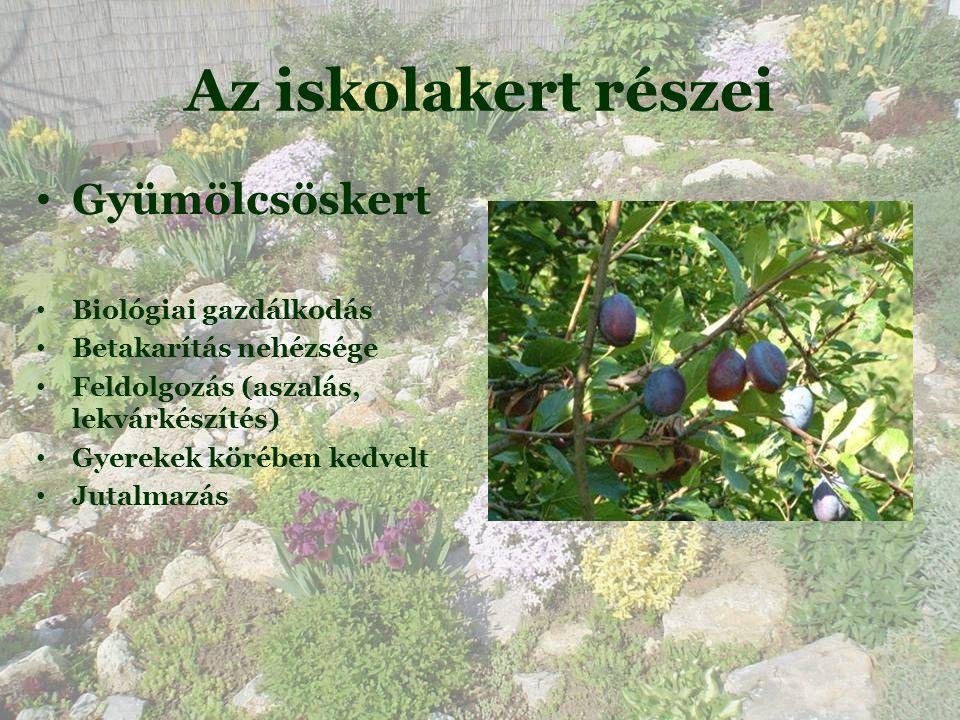Az iskolakert részei • Gyümölcsöskert • Biológiai gazdálkodás • Betakarítás nehézsége • Feldolgozás (aszalás, lekvárkészítés)  • Gyerekek körében kedvelt • Jutalmazás