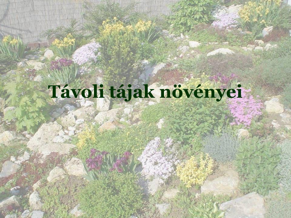 Távoli tájak növényei