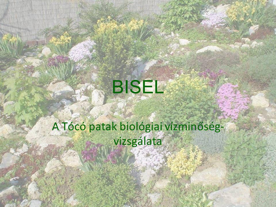 BISEL A Tócó patak biológiai vízminőség- vizsgálata