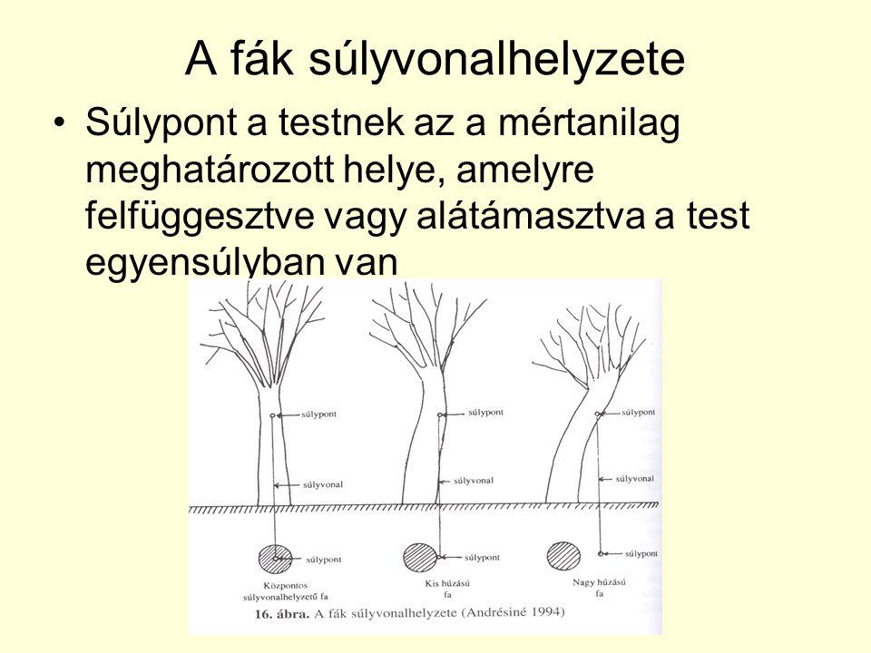 A fák súlyvonalhelyzete •Súlypont a testnek az a mértanilag meghatározott helye, amelyre felfüggesztve vagy alátámasztva a test egyensúlyban van