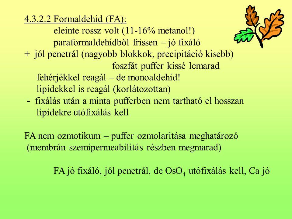 4.3.2.2 Formaldehid (FA): eleinte rossz volt (11-16% metanol!) paraformaldehidből frissen – jó fixáló + jól penetrál (nagyobb blokkok, precipitáció ki