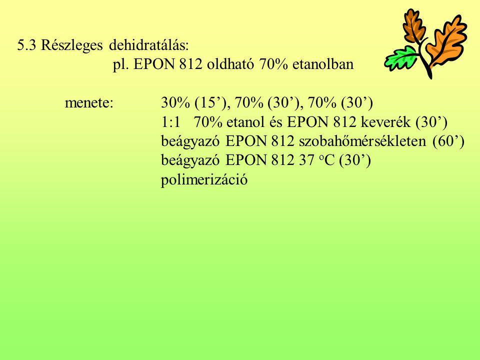 5.3 Részleges dehidratálás: pl. EPON 812 oldható 70% etanolban menete:30% (15'), 70% (30'), 70% (30') 1:1 70% etanol és EPON 812 keverék (30') beágyaz