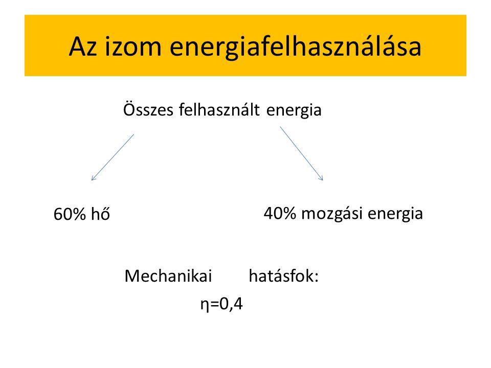 Az emberi test energiaigénye (csak vázlatosan, részletesen Élettan-on) Alap vagy nyugalmi napi energiaszükséglet: Nők: 700+7•testsúly (kg) Férfiak: 90