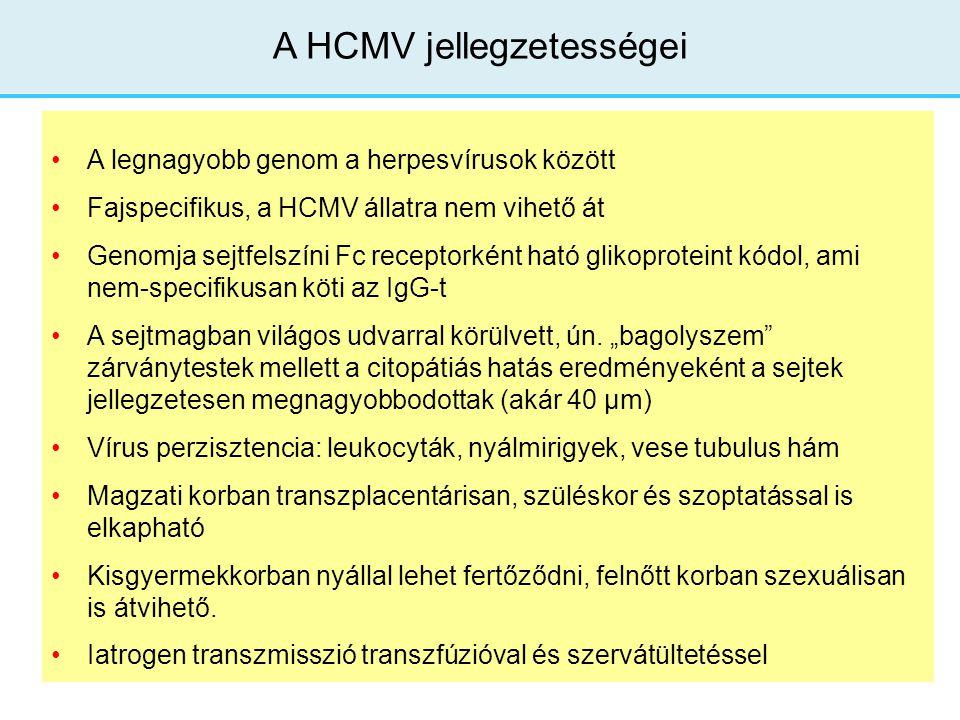 A legnagyobb genom a herpesvírusok között Fajspecifikus, a HCMV állatra nem vihető át Genomja sejtfelszíni Fc receptorként ható glikoproteint kódol, a