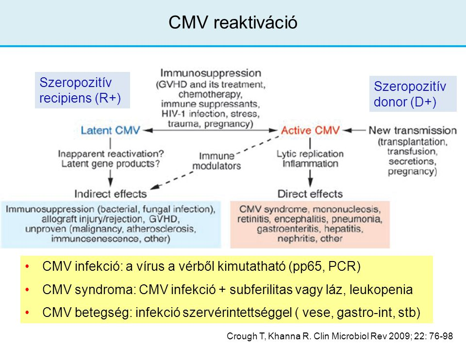 Crough T, Khanna R. Clin Microbiol Rev 2009; 22: 76-98 CMV reaktiváció CMV infekció: a vírus a vérből kimutatható (pp65, PCR) CMV syndroma: CMV infekc