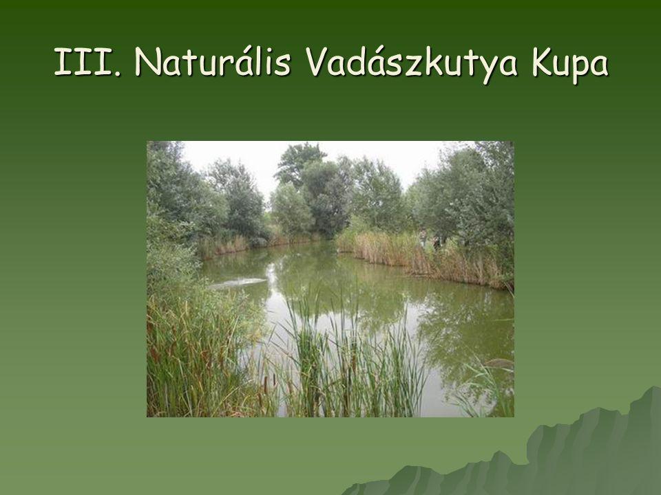 III. Naturális Vadászkutya Kupa