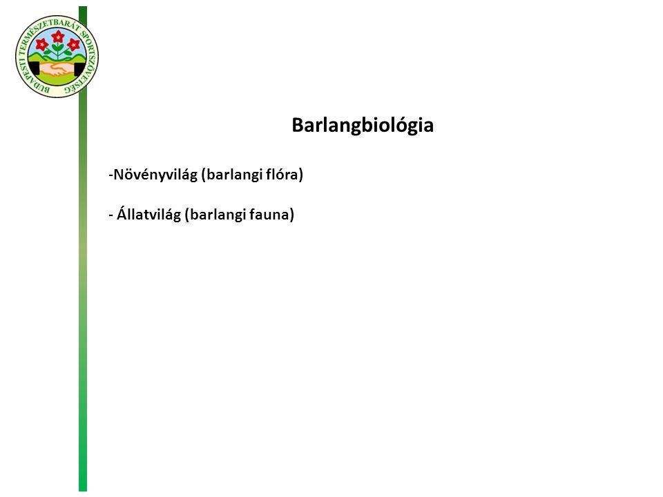 Barlangbiológia -Növényvilág (barlangi flóra) - Állatvilág (barlangi fauna)