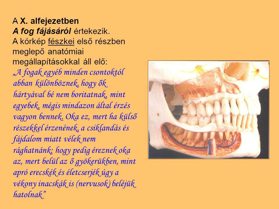"""A X. alfejezetben A fog fájásáról értekezik. A kórkép fészkei első részben meglepő anatómiai megállapításokkal áll elő: """"A fogak egyéb minden csontokt"""