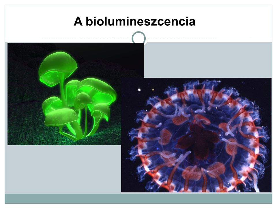 A biolumineszcencia