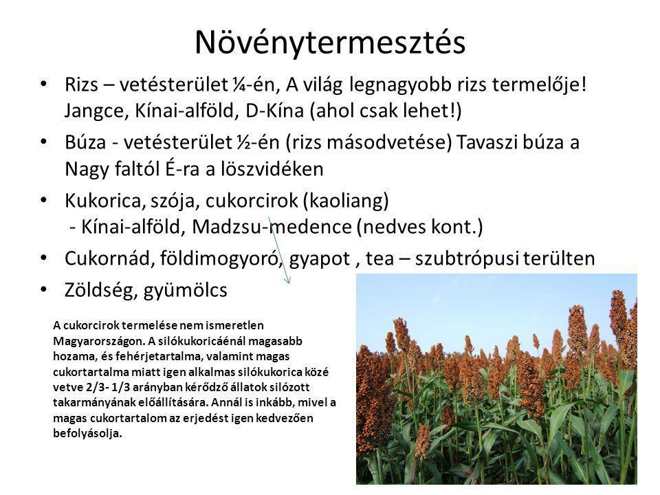 Növénytermesztés • Rizs – vetésterület ¼-én, A világ legnagyobb rizs termelője! Jangce, Kínai-alföld, D-Kína (ahol csak lehet!) • Búza - vetésterület