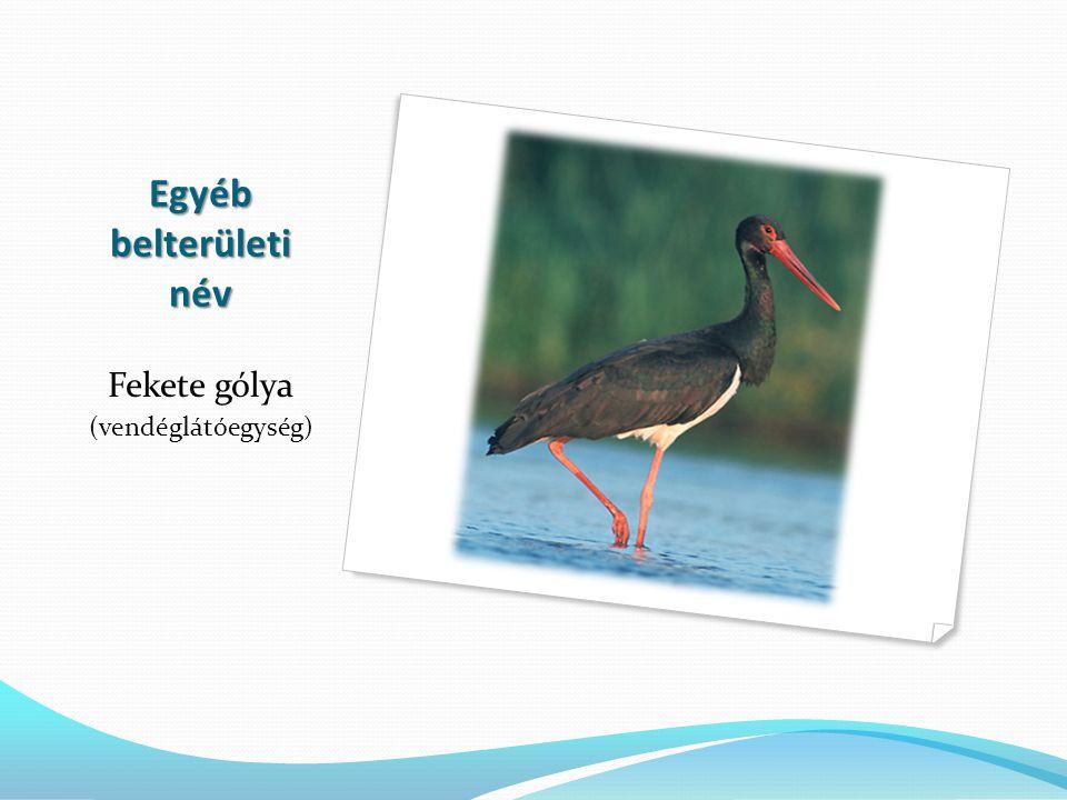 Egyéb belterületi név Fekete gólya (vendéglátóegység)