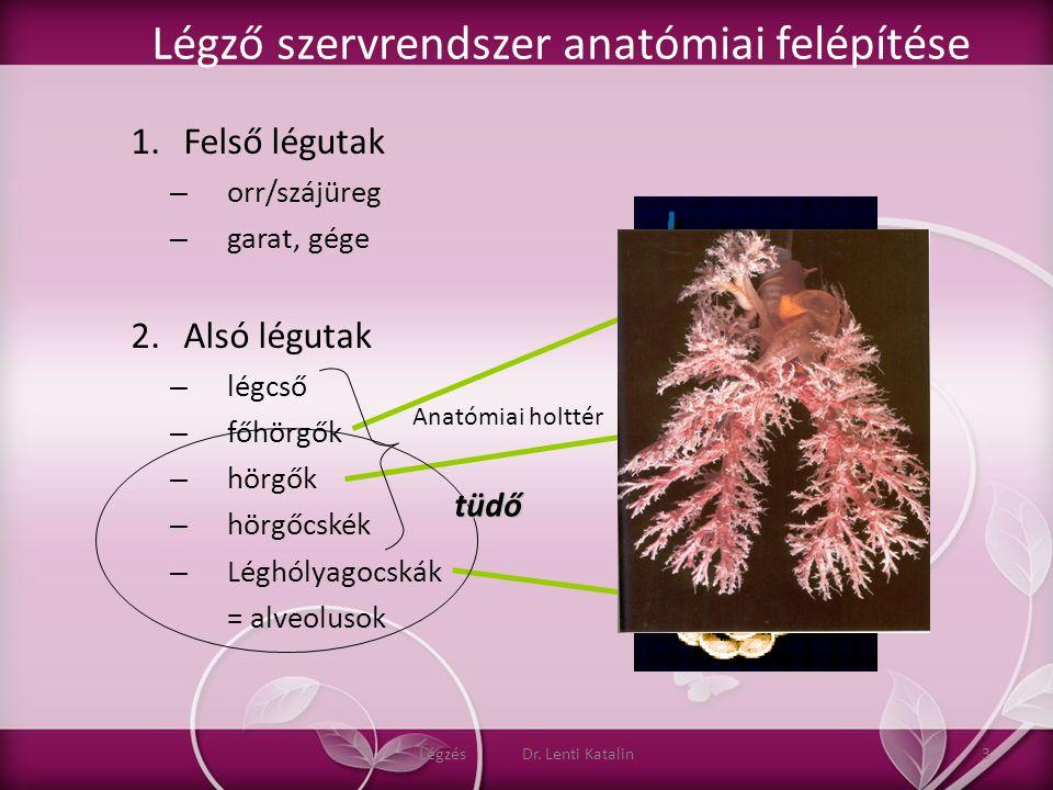 Légző szervrendszer anatómiai felépítése 1.Felső légutak – orr/szájüreg – garat, gége 2.Alsó légutak – légcső – főhörgők – hörgők – hörgőcskék – Léghó
