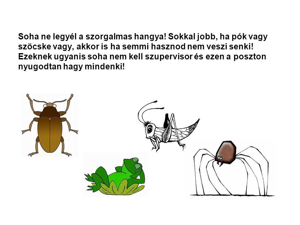 Soha ne legyél a szorgalmas hangya! Sokkal jobb, ha pók vagy szöcske vagy, akkor is ha semmi hasznod nem veszi senki! Ezeknek ugyanis soha nem kell sz