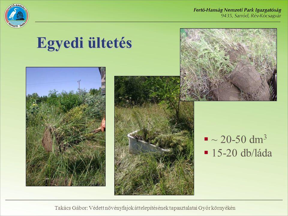 Egyedi ültetés  ~ 20-50 dm 3  15-20 db/láda Takács Gábor: Védett növényfajok áttelepítésének tapasztalatai Győr környékén