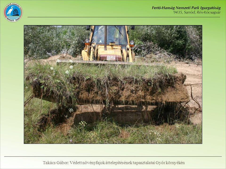 Átültetés gyeptéglával Takács Gábor: Védett növényfajok áttelepítésének tapasztalatai Győr környékén